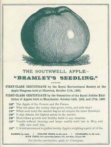 bramleys-seedling.jpg