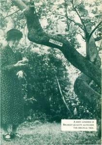 bramleys-tree.jpg